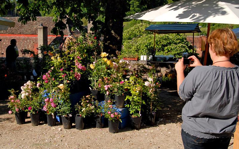 Fête de la Rose 2010 - Photo Marlène Rézenne